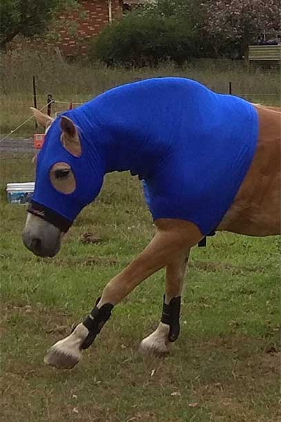 performa ride horse lycra hood