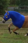 performa ride horse lycra hood1