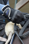 performa ride horse riding glove silver 1