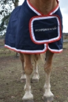 performa ride trophy rug front