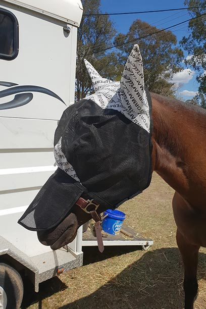 horse fly veil with ears nose left front performa ride