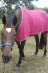 performa cool cooling horse rug left side