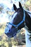 greenguard grazing muzzle blue performa ride