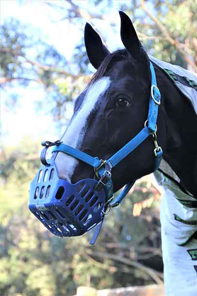 greenguard grazing muzzle blue performa ride