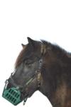 horse grazing muzzle on horse greenguard