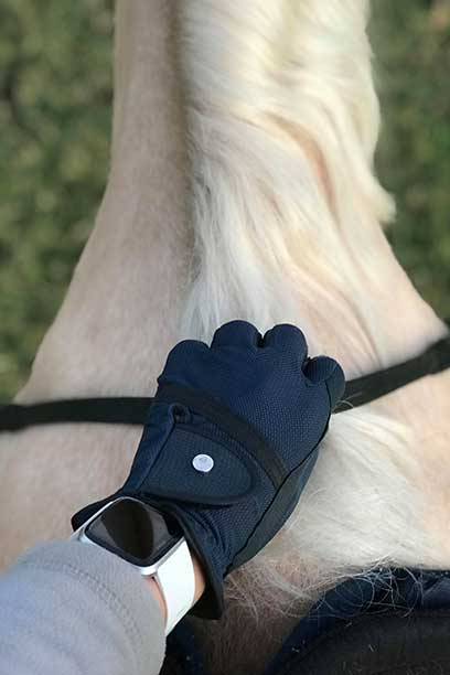 horse riding glove navy on horse top side performa ride