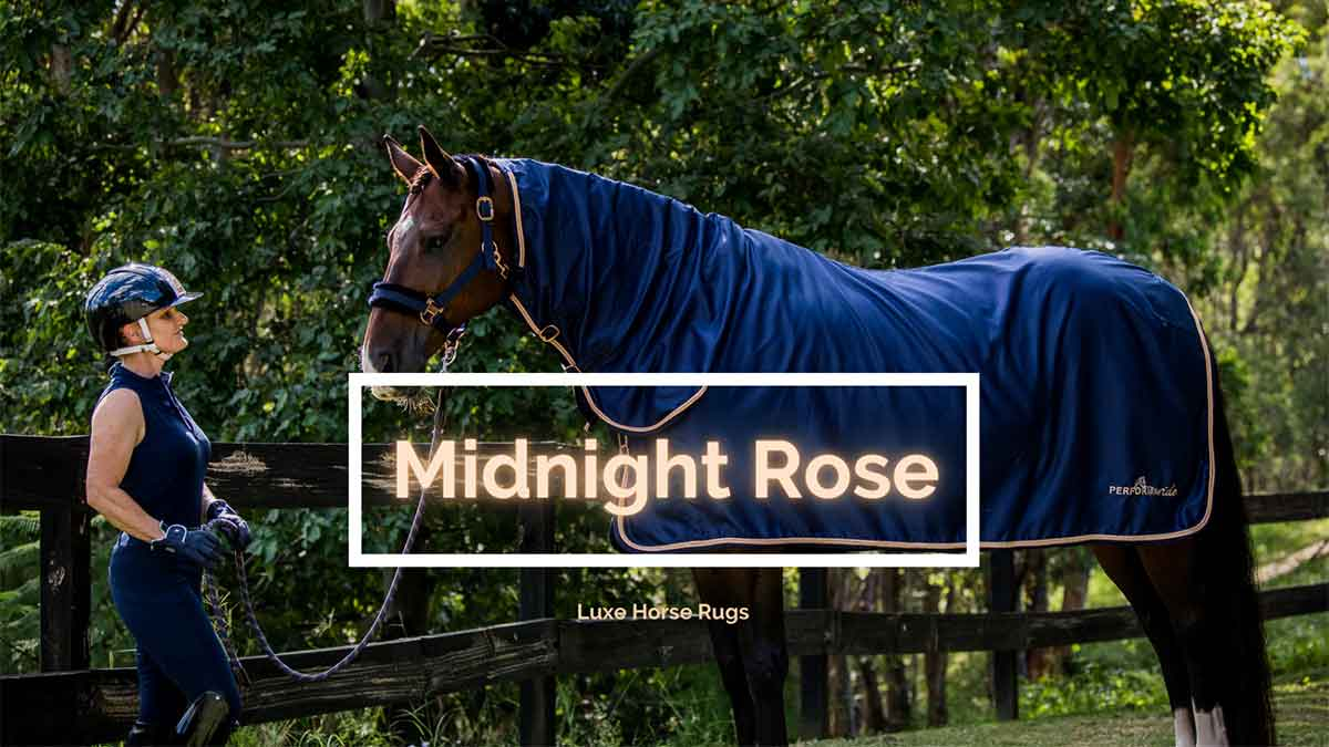 midnight rose horse rug and horse halter banner